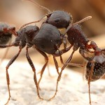 two ants having a cuddle